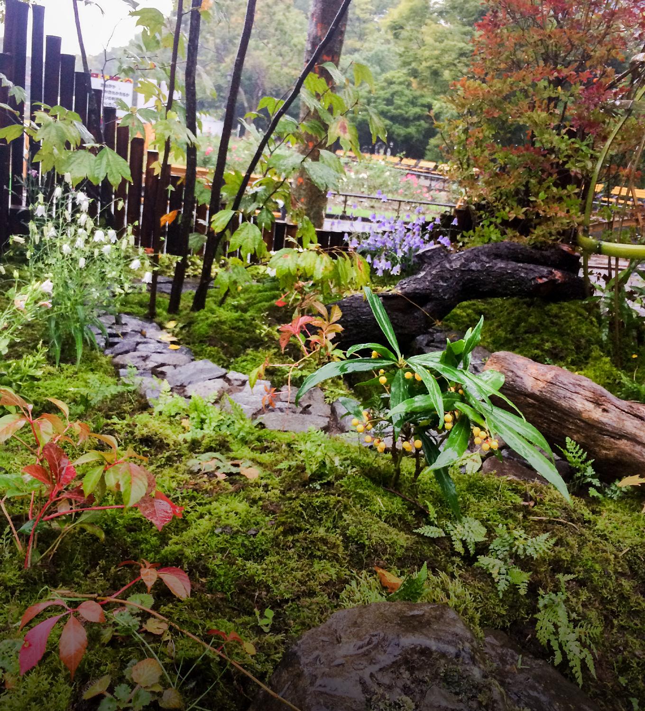 Display/Garden